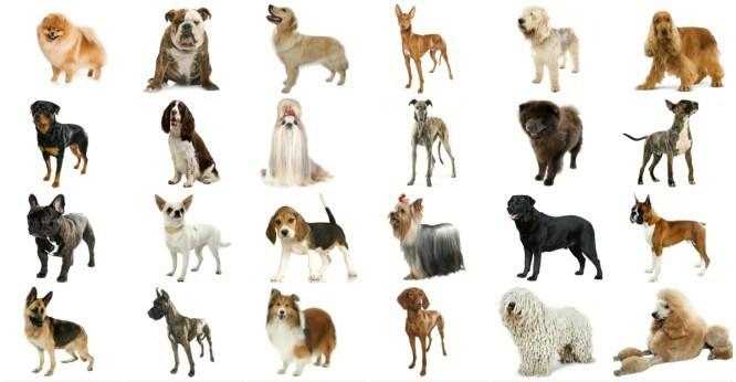 Nacionalna izložba pasa u Tivtu